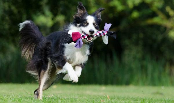 Franquia de pet shop móvel dicas e tira dúvidas
